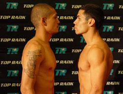 Bash Boxing